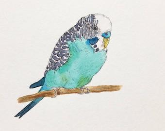 Bird: Turquoise Parakeet