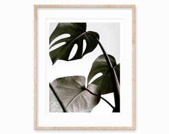 Monstera Printable, Monstera Art Print, Palm Leaf Print, Tropical Wall Poster, Tropical Leaf Print, Palm Leaf Prints, Botanical Prints, Art