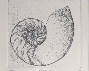 Original etching of a chambered nautilus shell cross section