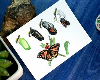 Watercolor Hatching Butterfly