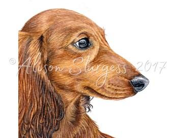 Dachshund Print, Long Haired Red Dachshund Watercolour