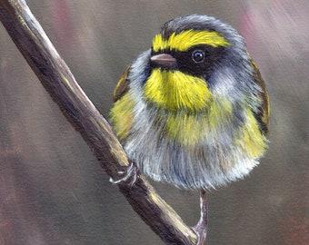 Bird Art - Bird Painting - Black Faced Warbler - SFA- Original Wildlife Acrylic Painting - Bird Lover Gift - Gift for Her - Realistic Bird