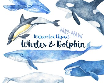 Watercolor Whale Clipart   Hand Drawn Whales & Dolphin Illustration Clip Art Set   Detailed Watercolour Nature Clipart Digital Download