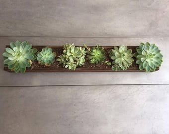 Succulent Table Rectangular Planter Centerpiece