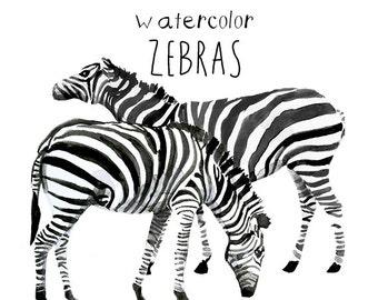 Watercolor Zebra Clipart Zebras Clip Art Commercial use digital scrapbooking Savannah Clip Art instant download