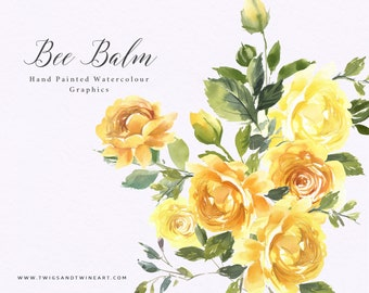 Hand Painted Watercolour, Yellow Floral Clipart - Lemon Bee Balm. Floral graphics for stationery, branding and social media.
