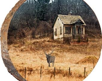 Fall Elk and Cabin - DAE001