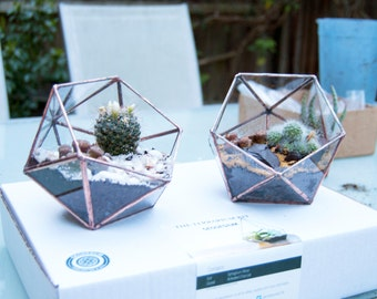 Small Glass Terrarium - Simple Icosahedron / Geometric Terrarium / Display Box / Candle Holder by Geodesium