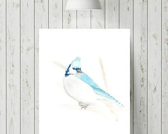 Blue Jay Print, Blue Jay Art, Blue Jay Bird Art, Watercolour Birds, Bird Print, Wildlife Art Prints