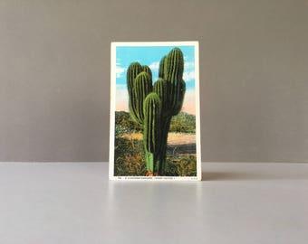 Vintage Cactus Post Card, Linen Post Card, Saguaro Cactus, Sahuaro Cactus, Desert Scene,Cactus Print, Cactus Decor, Vintage Cactus