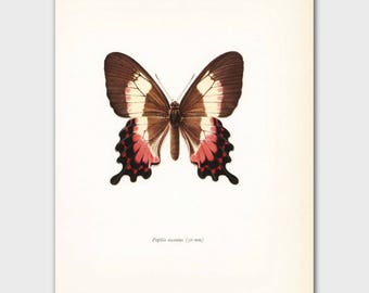 """Butterfly Decor, 1960s """"Neapolitan"""" Swallowtail Print, Pink and Brown Home Decor, Vintage Wall Art No. 32-1"""