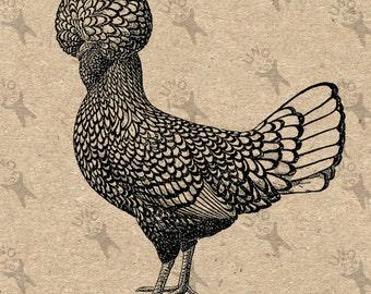 Antique image Hen Chicken Instant Download Digital printable vintage picture clipart graphic fabric transfer, burlap, decor  etc HQ 300dpi