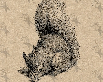 Vintage Squirrel with nut Instant Download Digital printable clipart graphic Burlap Fabric Transfer Iron On Pillows Tote Towels HQ 300dpi