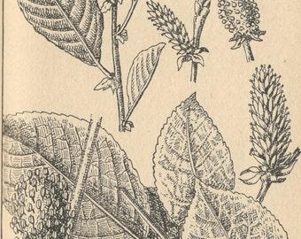 4 botanical print digital download