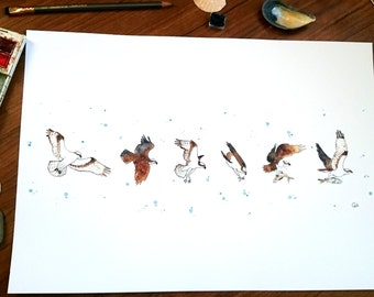 Osprey flying and fishing - A3 Print
