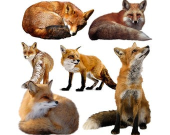 Fox overlay photo animal photoshop png