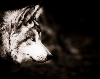 Wolf Wall Art - Wildlife Home Decor - Sepia Photo - Monochrome Animal Photography Fine Art