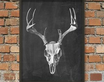 Deer Skull Antlers Poster - Animal Antlers Print - Vintage Antlers Illustration - Antique Anatomy - Skull Anatomy - Skull Biology Art Print