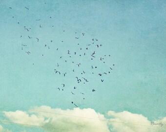 September Sky, birds, flying, blue, teal, white,  fine art photography