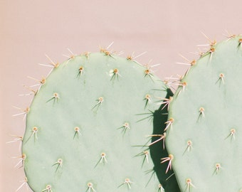 Cactus Print No. 16