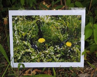 Summer dandelions with Kunai