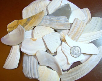 Striped Seashells fragments for jewelry making,your home decor or any project Lot of 50