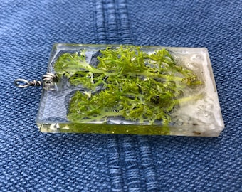 Moss Terrarium Pendant