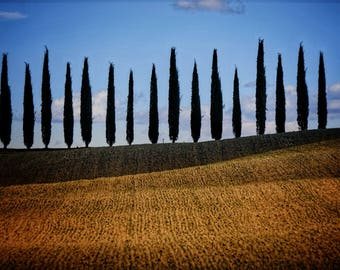 A Perfect Row, II, Tuscany: An Archival Pigment Fine Art Print of Cypress Trees Lining a Hilltop Ridge in Tuscany, Italy