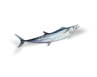 King Mackerel Decal, King Mackerel Sticker, Kingfish Decal, Kingfish Sticker