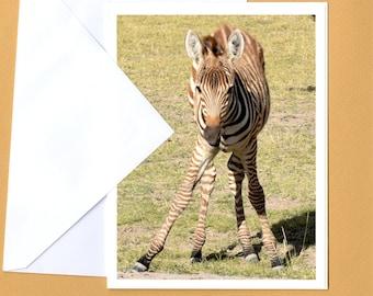 Baby Zebra Photo Greeting Card