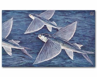 "Tropical Fish Art (Vintage Ocean Nursery Decor) --- ""Flying Fish"" No. 227"