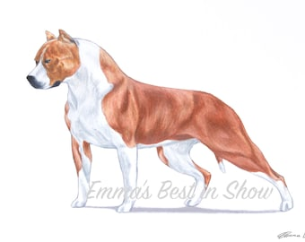 American Staffordshire Terrier Dog - Pit Bull - Archival Fine Art Print - AKC Best in Show Champion - Breed Standard - Terrier Group