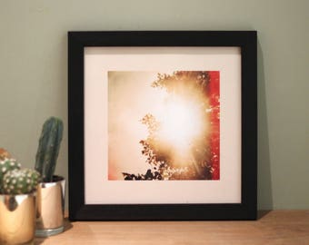 Treelight - Lomography Photo Art Print Poster