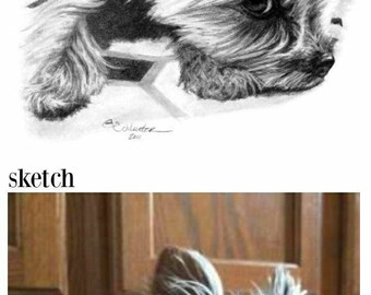 Pet Portrait Pet Portrait Custom Sketch Special Size & Pricing Option on Hand Drawn Sketch of Your Pet