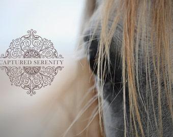 Beautiful closeup of white horses mane and face