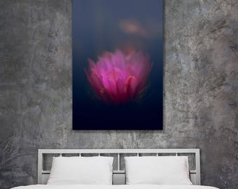 Fine art flower photography - Cactus Bloom from Black - original home decor pink black toned wall art print
