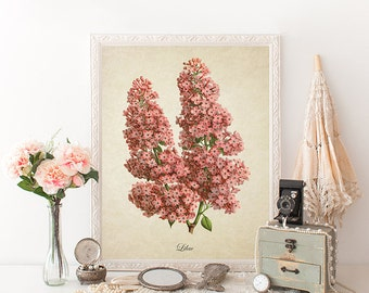 Antique Botanical Wall Art Print Pink Lilacs Giclee Vintage Home Decor Natural History Art Colorful Decorative Reproduction FL002