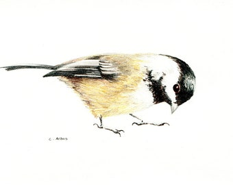 Original Colored Chickadee Sketch - 659