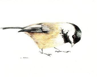 Original Colored Chickadee Sketch - 659
