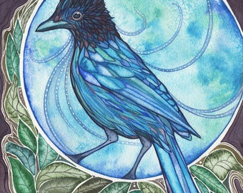 Blue Jay 8.5 x 11 print of beautiful watercolor painting artwork, turquoise teal spirit guide, steller's long-crested mountain pine jay