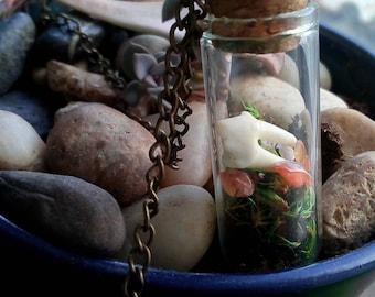 Vintage Animal Tooth & Moss Terrarium Necklace