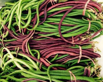 Long Beans, Red & Green Mix, Heirloom yard-long pole beans 12+ seeds