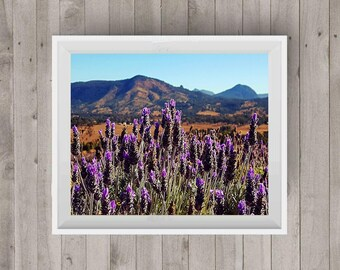 Lavender Field Landscape Photography Lavender Photo Photography Art Digital Image Downloadable Print Wall Art Home Decor