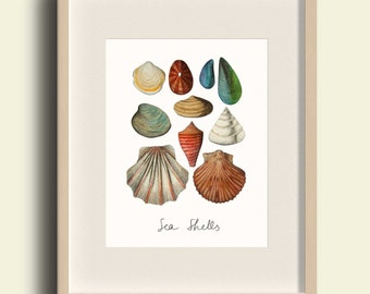 Sea Shell print, Seashell art, Nautical print A4