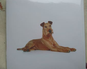 Irish Terrier greetings card