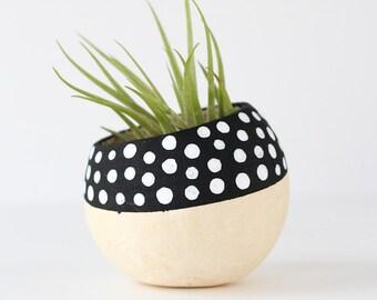 Black and White Polka Dot Air Plant Holder + Plant