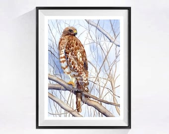 Red Shouldered Hawk, Nature Home Decor Bird Art Prints, Hawk art print, Bird of Pray painting, Wildlife art print, WatercolorbyMuren