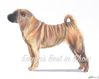 Chinese Shar-Pei Dog - Archival Fine Art Print - AKC Best in Show Champion - Breed Standard - Non-Sporting Group - Original Art Print