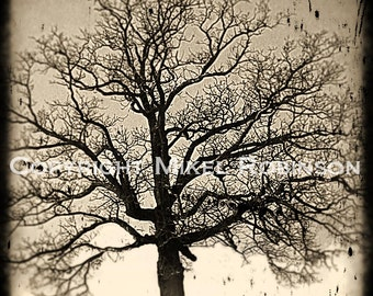 Tree of Life. Oak Tree. Black and White. Wall Decor. Original Digital Photograph Art Print. Wall Art. EASTERN OAK by Mikel Robinson