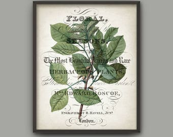 Green Leaves Art Print, Botanical Print, Vintage Wall Art, Green Leaf, Woodland Plant, Botanical Home Decor, Tree Branch Book Plate B781